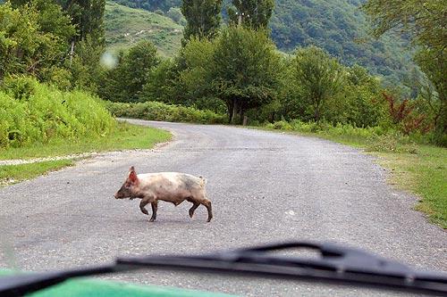 На машине в Абхазию 7