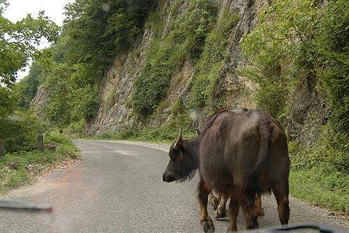 На машине в Абхазию 6
